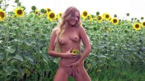 Filamta goala in lanul de floarea soarelui